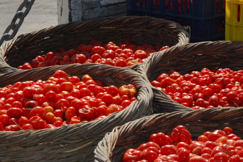 Santorini cherry tomato (tomataki)